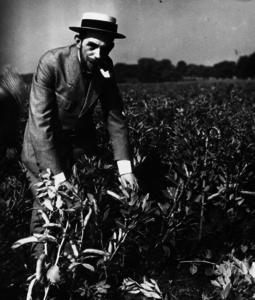 Bohnenpflanzen