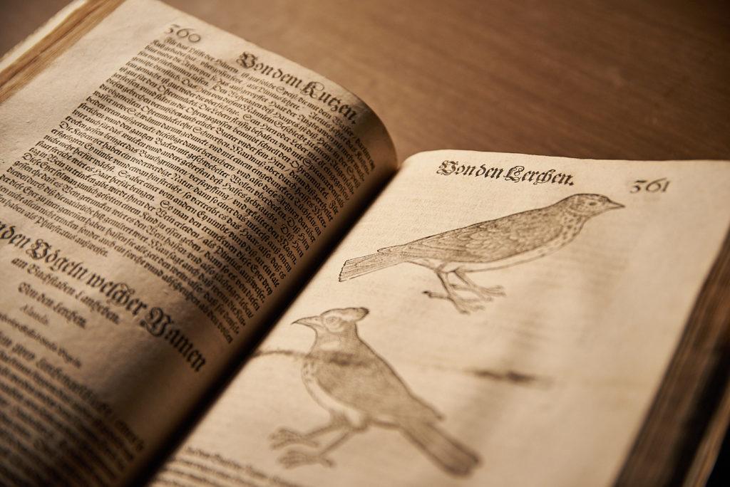 Vogelbuch (Foto)