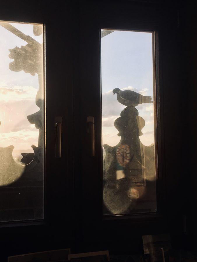 Taube vor dem Turmstubenfenster